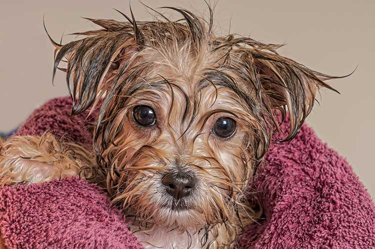 DIY Natural Flea Shampoo For Dogs | Dog