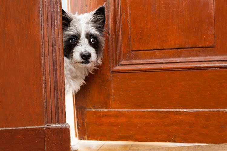 Dog Afraid of Thresholds