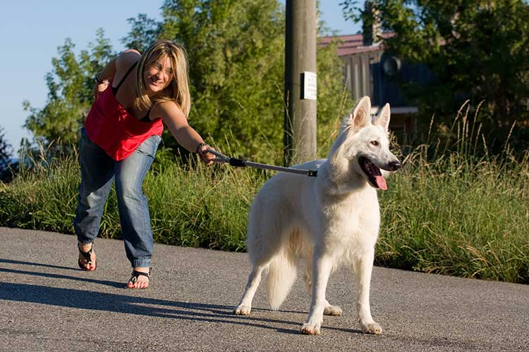 How To Train Big Dog To Walk On Leash