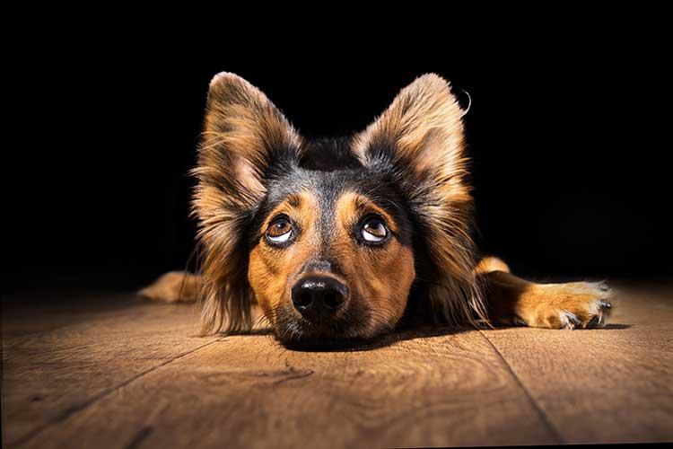 Help! My Restless Dog Doesn't Sleep   Dog Training Nation