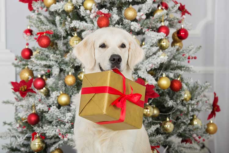 Best Christmas Gifts For Dogs 2017 | Dog Training Nation