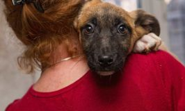 How To Start Volunteering For Dog Rescue Groups